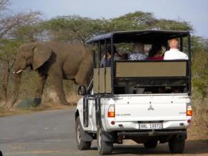 Elefante cruzando el camino